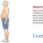 Рацион питание для эндоморма2
