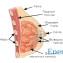 Тренировка мышц груди для женщин2