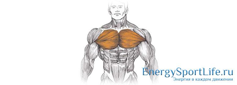 Для чего нужны грудные мышцы