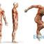 Как бороться со слабыми участками в мускулатуре