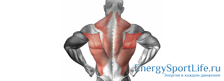 Анатомия : Глубокие мышцы спины. Подзатылочные мышцы.