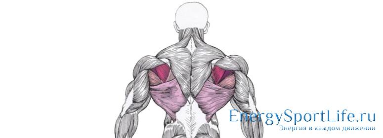 Анатомия мышц спины: строения, функции, упражнения для развития мышц спины