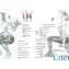 Задние мышцы бедра