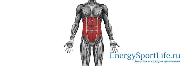 Анатомия мышц живота: строение, функции, упражнения для развития мышц живота