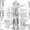 мышцы голени тренировка