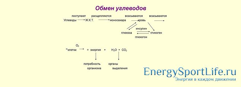 Что такое углеводный обмен