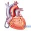 Особенности строения мышечной ткани5