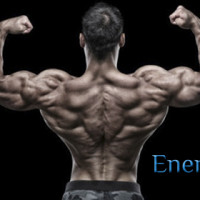 Упражнения для развития спины